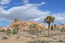 Free Desert Vista Royalty Free Stock Photography - 30160687