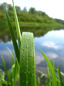 Free Dewdrop On A Green Blade Near River Stock Image - 30161751