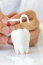 Free Flossing Teeth Concept Royalty Free Stock Photos - 30189748