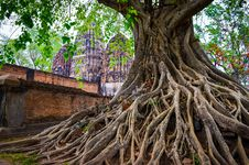 Free Tree Roots In Sukhothai Historical Park With Temple Background Royalty Free Stock Photo - 30185535