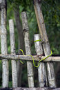 Free Green Snake On Fence Royalty Free Stock Images - 30193169