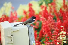 Free Bird In The Garden Royalty Free Stock Photos - 30190138