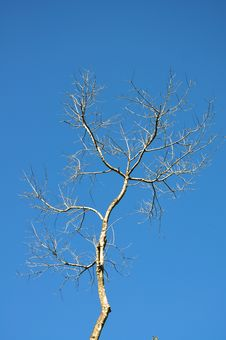 Free Dry Branch Of Tree Royalty Free Stock Images - 30191019
