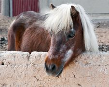 Free Horse In The Paddock At The Farm. Royalty Free Stock Photo - 30191205