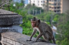 Free Thai Monkey Stock Photo - 30191650