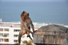 Free Thai Monkey Royalty Free Stock Photo - 30191665