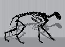 Free Robotic Cat Skeleton Stock Photography - 30192192