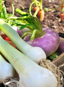 Free Fresh Garden Vegetables Royalty Free Stock Image - 30193056
