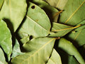 Free Bay Leaves Royalty Free Stock Photography - 3024807