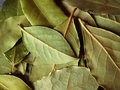 Free Macro Bay Leaves Royalty Free Stock Photography - 3024827