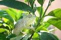 Free Chameleon Stock Photography - 3026632