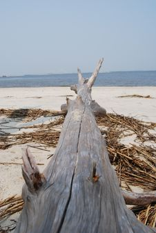Free Beach Stump Royalty Free Stock Photos - 3020408