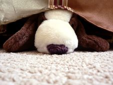 Free Stuffed Animal Under Bed Stock Photography - 3022192