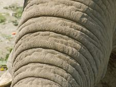Free Elephant Stock Photography - 3022512
