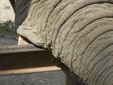 Free Elephant Royalty Free Stock Photography - 3022567