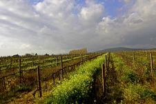 Free Vineyard In Winter Stock Photography - 3022592