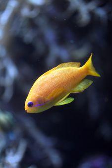 Free Orange Coral Fish Stock Photo - 3022960