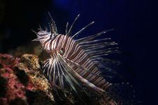 Free Dragon Fish Stock Photo - 3023030