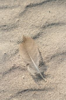 Feather In The Sand Royalty Free Stock Image