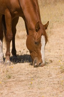 Free Horse At Pasture Royalty Free Stock Photography - 3023447