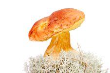 Free Brown Mushroom On Moss Royalty Free Stock Image - 3023626