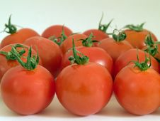 Free Tomatoes Stock Photography - 3024502