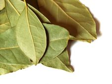 Free Green Bay Leaves On White Royalty Free Stock Image - 3024816