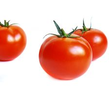 Free Juicy Tomatoes Royalty Free Stock Photography - 3024867