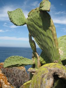 Free Cactus In The Sea Stock Images - 3025274
