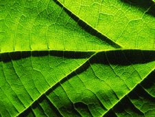 Free Shadows On A Leaf Royalty Free Stock Photo - 3026255