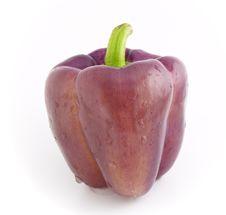 Free Violet Pepper Bell Stock Images - 3027424