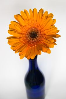 Free Flower In A Vase Stock Photography - 3027452
