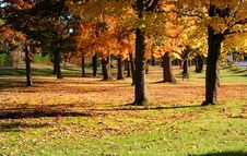 Free Autumn In A Park Stock Images - 3029204