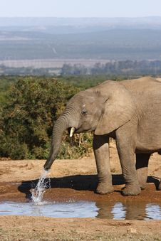 Free Elephant Playing In The Water Royalty Free Stock Photo - 3029815