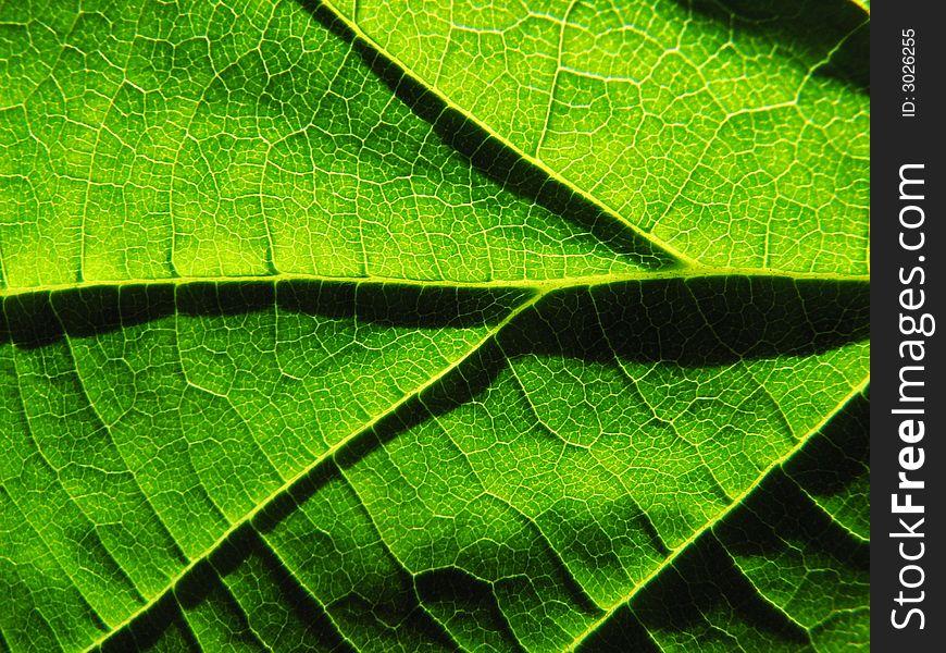 Shadows on a leaf