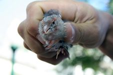 Free Hand Olding A Bird Stock Image - 30201171
