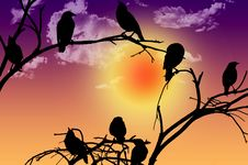 Free Birds Silhouette Sitting On A Branch At Sunset Royalty Free Stock Photo - 30201755