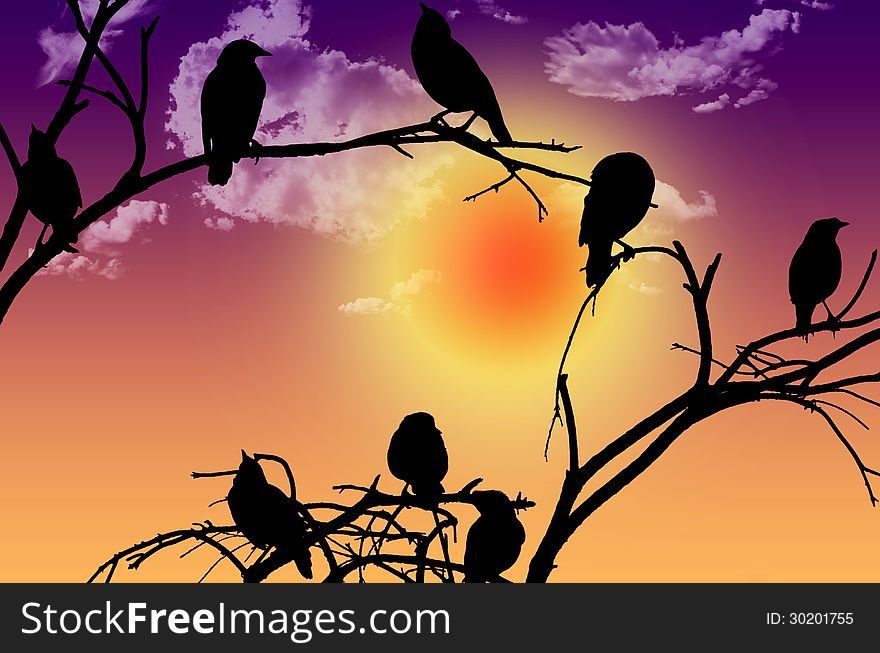 Birds silhouette sitting on a branch at sunset