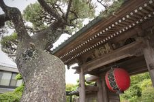 Free Pine, Temple Gate Stock Images - 30210754