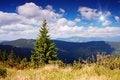 Free Pine In The Mountains Stock Photos - 30227363