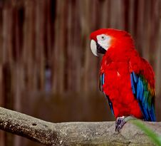 Free Colorful Macaw Stock Photography - 30222112
