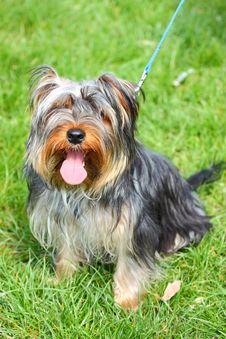Free Dog Outside Stock Image - 30222571