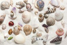 Seashells And Sand Stock Image