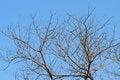 Free Dead Tree Royalty Free Stock Photos - 30231508