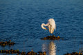 Free Lovely White Egret At Dawn Stock Photos - 30237993