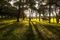 Free Sunlight In The Green Forest, Spring Time Stock Images - 30239664