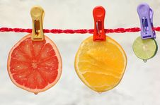 Free Sliced Citrus Fruits With Droplets Stock Image - 30230371