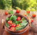 Free Barrel Of Pickled Tomatoes Royalty Free Stock Image - 30242196