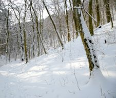 Free Winter Forest Stock Photo - 30243590