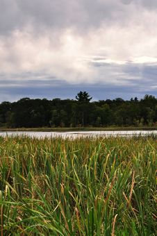 Free Wetland Grass Royalty Free Stock Images - 30249399